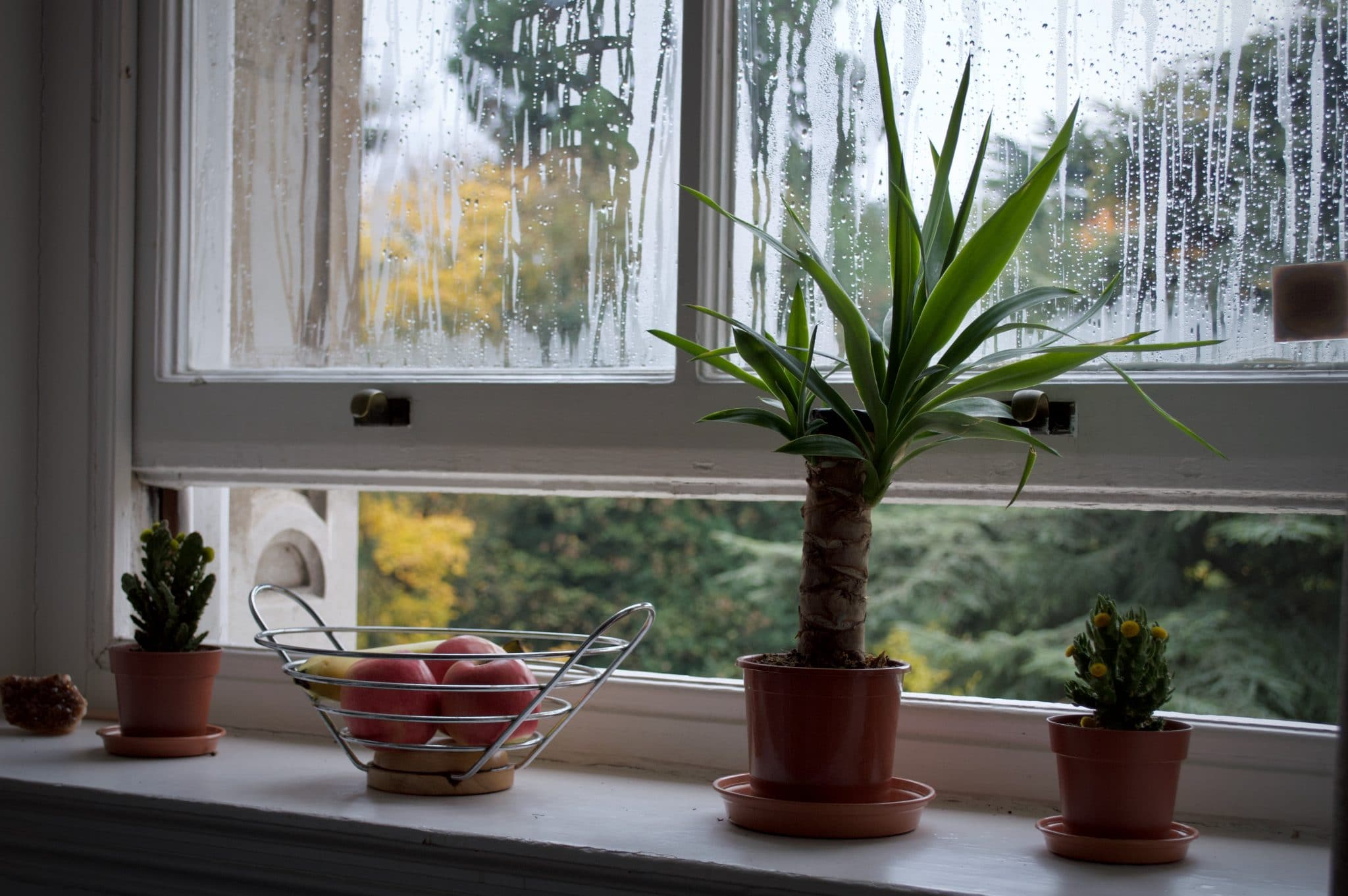 Open-kitchen-window-with-plants